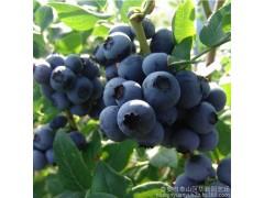 奥尼尔新鲜蓝莓鲜果头茬大果现摘现发基地直供批发 绿色原生态水果
